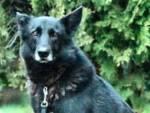 blu cane ricerca Oltreserchio