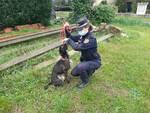 cane maltrattato a Empoli
