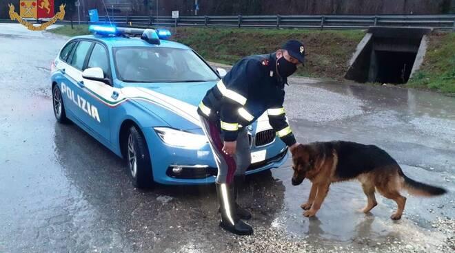 cane salvato Polstrada Valdottavo