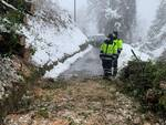 Emergenza neve alberi caduti in strada