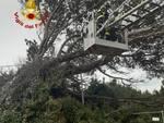 maltempo, vigili del fuoco mettono in sicurezza alberi caduti