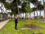 Piantumazione alberi Empoli