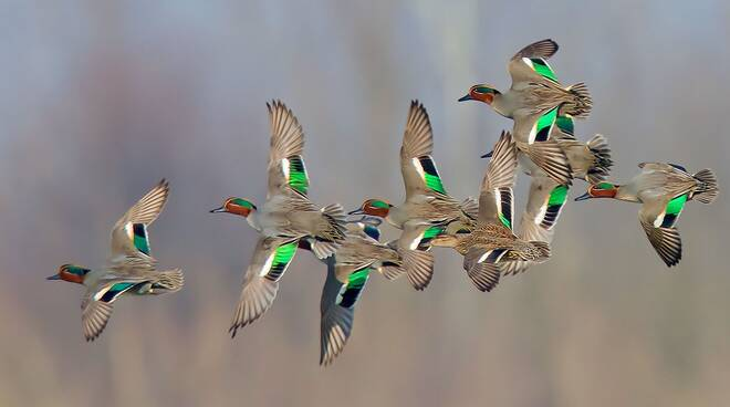 Uccelli Padule di Bientina