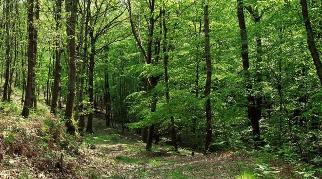 riserva montefalcone