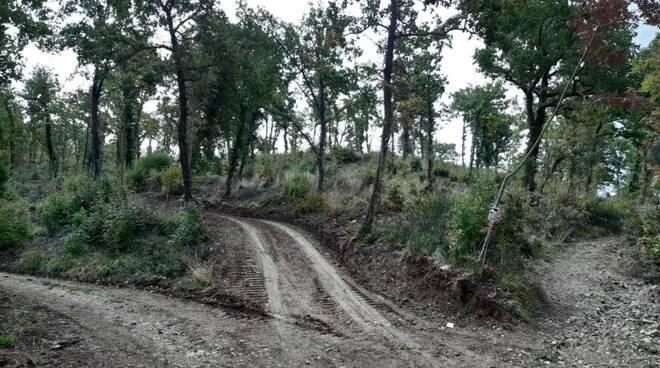 strada nel bosco abusiva
