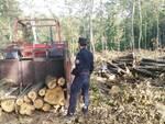 taglio illegale di alberi