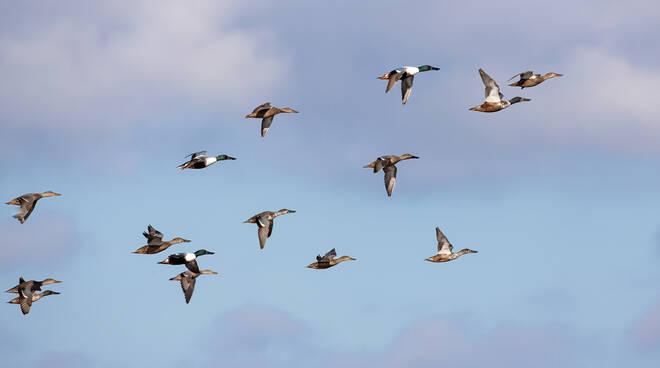 uccelli padule di fucecchio