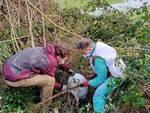 Volontari e migranti per la pulizia partecipata delle oasi di Bottaccio, Tanali e Lago della Gherardesca
