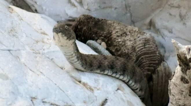 WWF serchio
