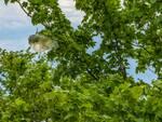 albero ambiente verde