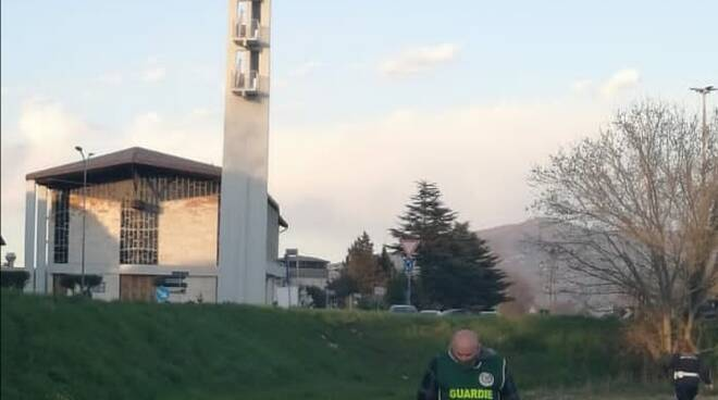cane carbonizzzato sull'arno a Pisa