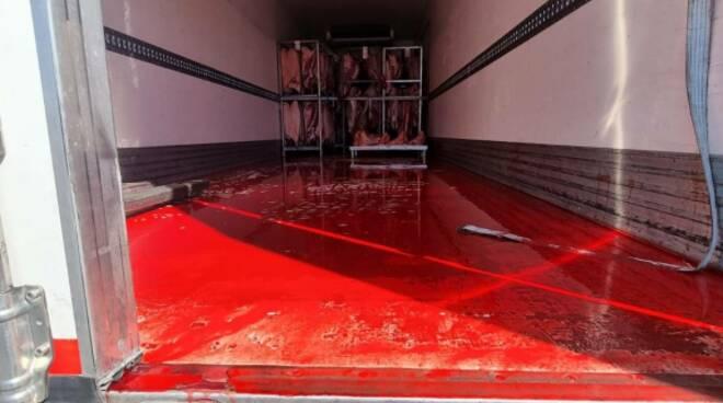 controllo Polstrada Lucca animali macellati sangue