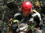 cane nel dirupo salvato a Grosseto