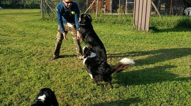 Caninamente Parlando lezioni cani animali