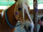 cavalli specchio studio di UniPi