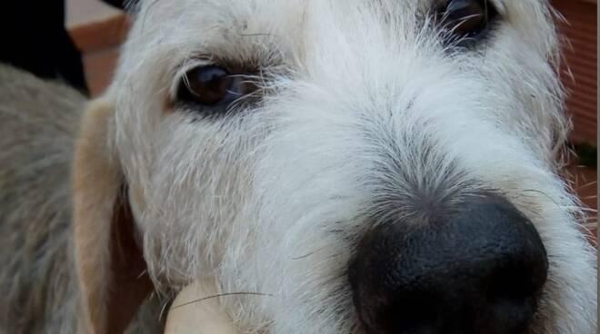 gerry cane adozione