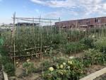 giardino frutteto Paduletta Altopascio