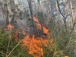 incendio boschivo a seggiano