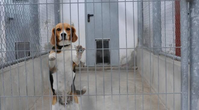 lega anti vivisezione foto Lav