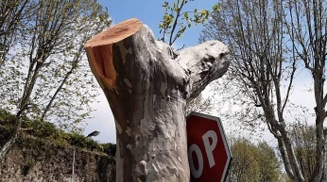 taglio alberi pistoia