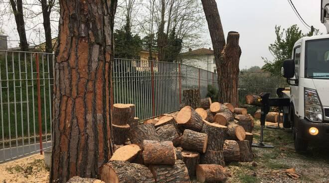 Taglio pini pericolanti nel Comune di Porcari