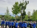 alberi per libri scuola San Marco