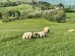 animali da salvare allevamento etico chiuso