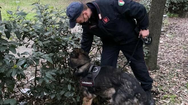 carabinieri viareggio blit in pineta di ponente
