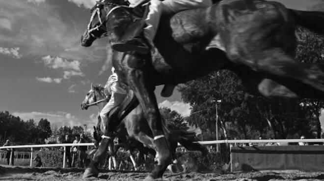 Cavalli palio di Fucecchio