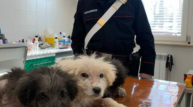 cuccioli maltrattati a Arcidosso