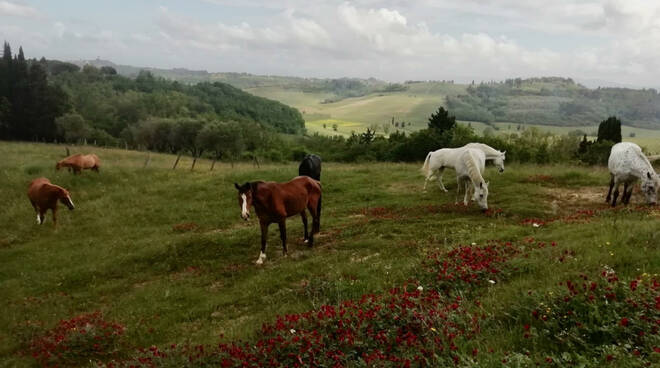 trasferimento cavalli sieropositivi Italian horse protection