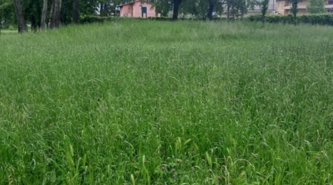 Via del Giardino Po ntetetto erba alta