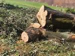 alberi abbattuti circonvallazione Lucca