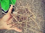 lavori San Concordio canale Benassai, nido alberi abbattuti