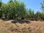 Pulizia bosco Montefalcone