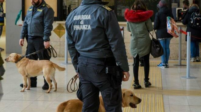 Unità cinofila Guardia di finanza Pisa
