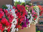 Balconi fioriti 2021 Coreglia