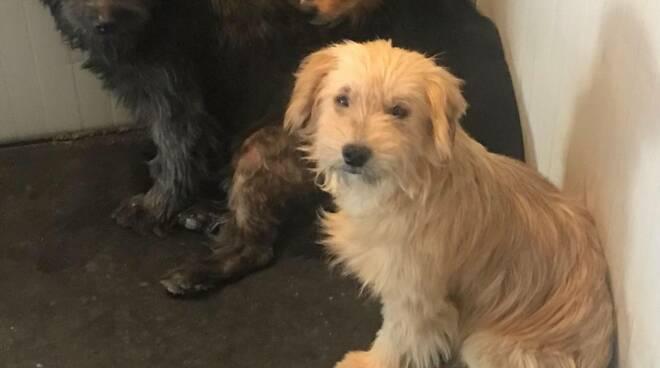 canile sequestrato a Molazzana Firenze adotta 8 cani