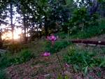 Giardino botanico Maria Ansaldi Pania di Corfino