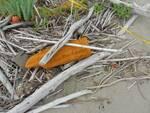 piante acchiappa plastica