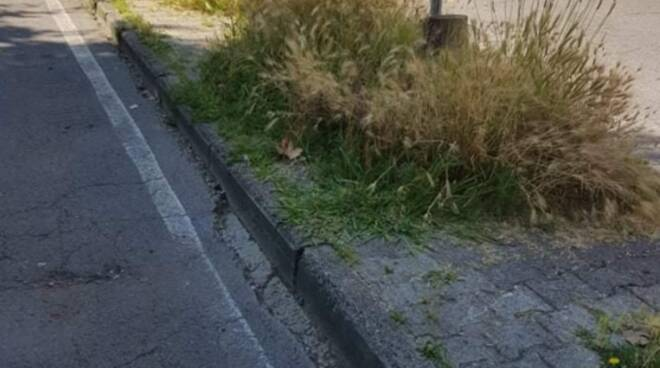segnalazione incuria del verde a Torre del Lago e Viareggio