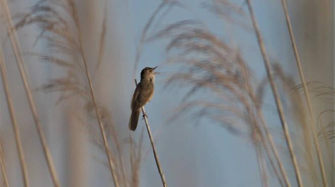 uccelli padule di Fucecchio foto Alessio Bartolini