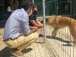 Accolti a Prato 10 del 71 cani del canile sequestrato a Molazzana