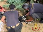 Cane intrappolato in un cunicolo e salvato dai pompieri