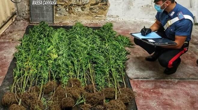 Coltivava marijuana nell'orto di casa: nei guai un 42enne