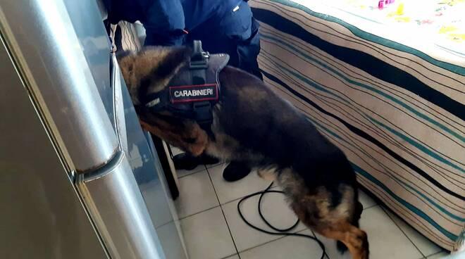 Lion cane antidroga carabinieri di San Rossore