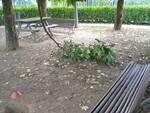 parco boschi castelnuovo garfagnana