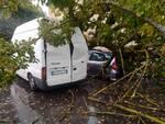 albero piomba su un'auto in sosta a Fucecchio