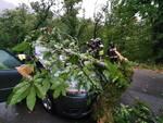 albero sopra auto a Vagli