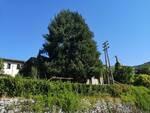 cavo Borgo a Mozzano